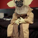 déguisement pour chien maître Yoda